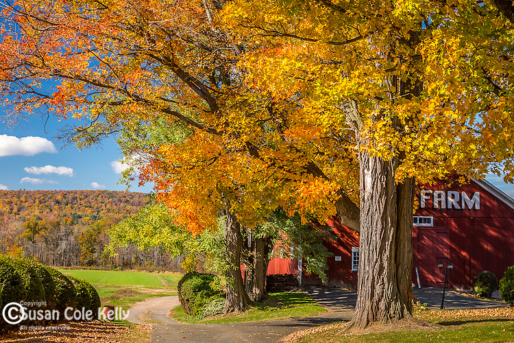 Fall foliage at the Grand Farm in East Granby, Connecticut, USA