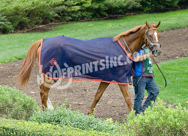 Master Shade before The Forever Together Stakes at Delaware Park on 9/1/12