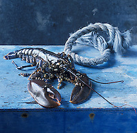 Europe/France/Bretagne/29/Finistère /Roscoff : Homards Bleus de Bretagne  Stylisme Valérie Lhomme //  //  France, Finistere, Roscoff, Brittany blue lobsters, photography styling by Valerie Lhomme