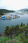 Englee and Grevigneaux Harbours, Newfoundland