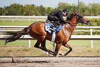 #128Fasig-Tipton Florida Sale,Under Tack Show. Palm Meadows Florida 03-23-2012 Arron Haggart/Eclipse Sportswire.