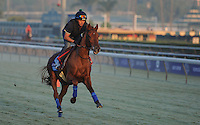 Fantastic Moon, trained by Jeremy Noseda, exercises in preparation for the upcoming Breeders Cup at Santa Anita Park on October 31, 2012.