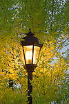 A street lamp surrounded by leaves on a tree
