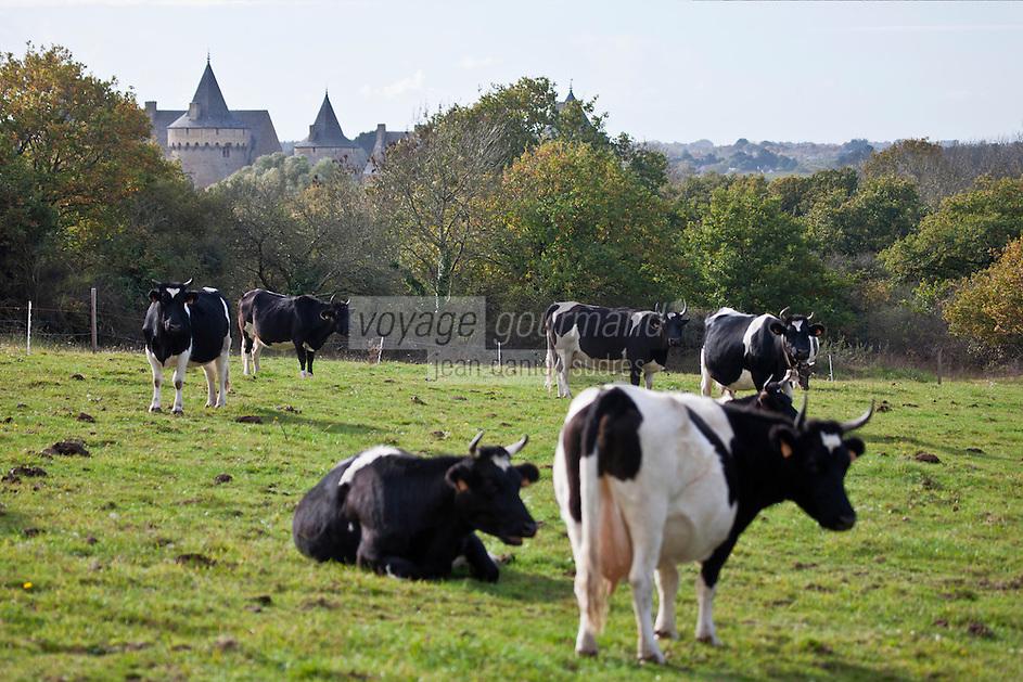 Europe/France/Bretagne/56/Morbihan/Sarzeau: Ferme fromagère de Sucinio, située sur les hauteurs, la vue sur le château de Suscinio est garantie.La ferme fromagère transforme le lait de petites vaches bretonnes pie noir ,  Production du fromage: Tome de rhuys  et Élevage de vaches de race bretonne pie noir .