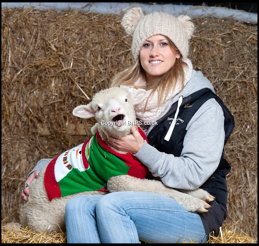 BNPS.co.uk (01202) 558833<br /> Picture: LauraJones/BNPS<br /> <br /> Farm park assistant Emma Shaw (28) gets the Poll Dorset lambs at Farmer Palmer's Farm Park near Wareham, Dorset ready for the cold weather.<br /> <br /> These cosy lambs are getting into the festive spirit after being given their own knitted Christmas jumpers to wear.<br /> <br /> Holly and Ivy are Dorset Poll sheep which are the only breed to be born year round.<br /> <br /> The pair, the last of the year to arrive at an activity farm, were let outdoors with the rest of the lambs but staff brought them back inside when they noticed they were shivering.<br /> <br /> And to give them extra insulation, they have knitted Holly and Ivy two seasonal sweaters to wear at night.<br /> <br /> The woolly jumpers have been made to match their names, with red wool for Holly and a bright green colour for Ivy.<br /> <br /> The two-month-old lambs wear the jumpers during the chilly nights at Farmer Palmers Farm Park near Poole, Dorset.