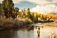 An angler casts on the Ruby River near Alder, Montana.