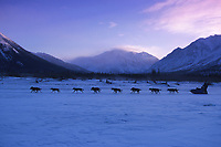 P Kyzer Mushing Near Rohn Alaska Range Iditarod 99 AK Morning