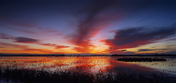 Sunset over Wetland, Bosque del Apache National Wildlife Refuge, Socorro, New Mexico, USA