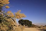 Israel, Arava region, Shizaf nature reserve