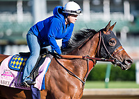LOUISVILLE, KENTUCKY - MAY 02: Abel Tasman, owned by Clearsky Farms and trained by Bob Baffert, exercises in preparation for the Kentucky Oaks at Churchill Downs on May 2, 2017 in Louisville, Kentucky. (Photo by Scott Serio/Eclipse Sportswire/Getty Images)