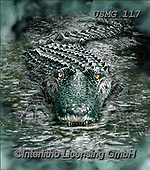 Steven-Michael, REALISTIC ANIMALS, REALISTISCHE TIERE, ANIMALES REALISTICOS, paintings+++++,USMG117,#a#, EVERYDAY,crocodile