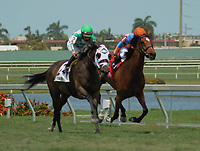 HALLANDALE BEACH, FL - APRIL 01: Summersault, trained by Mark Hennig and Paco Lopez in the irons, takes the Orchid Grade III Stakes on Florida Derby Day at Gulfstream Park on April 01, 2017 in Hallandale Beach, Florida. (Photo by Carson Dennis/Eclipse Sportswire/Getty Images)