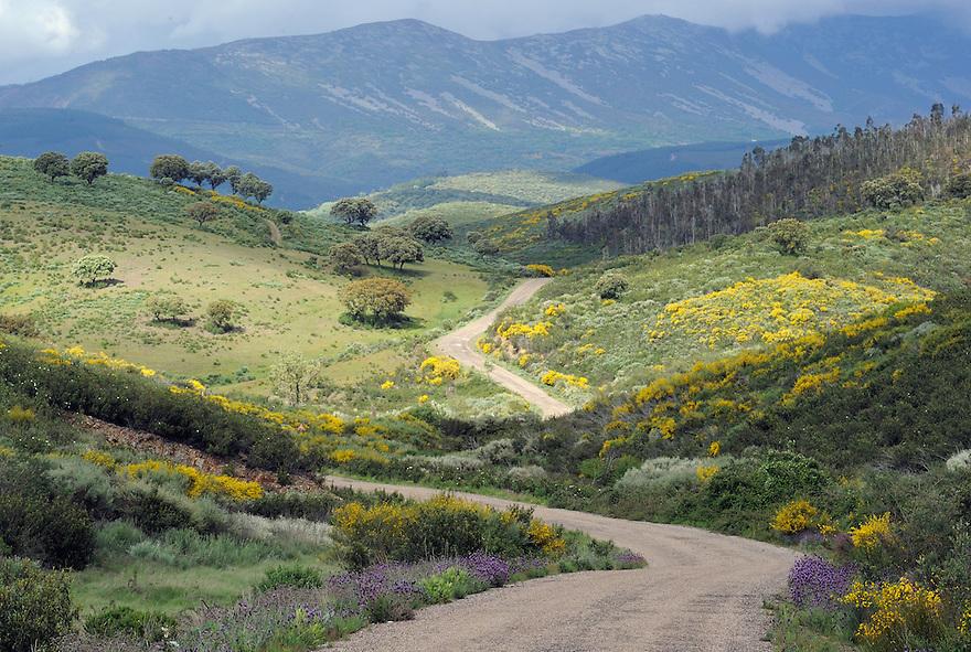 Land abandonment<br /> Vegas de Domingo Rey village<br /> Salamanca Region, Castilla y Le&oacute;n, Spain