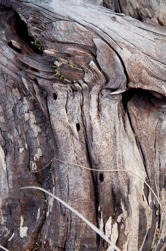 Driftwood Close-up  at Loomis Lake State Park, Long Beach, Washington, US