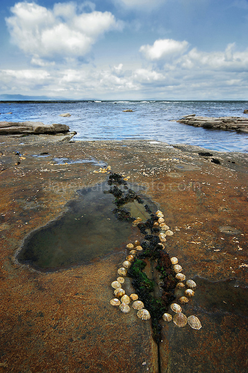 Shell formation on rocks,  Mullaghmore, Sligo