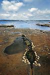 Shell formation on rocks,  Mullaghmore, Sligo