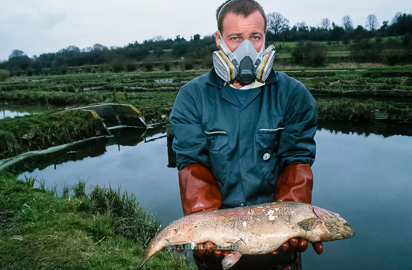 """An environment agency wokred holds a dead trout on the  River Kennet in one of Britain's worst ever incidents of river poisoning which killed more than three million fish.<br /> Scientists from the Agency say carryed out door-to-door enquiries at farms and businesses around the village of Little Bedwyn, Wiltshire, <br /> It is thought contaminants entered the river near the village and spread downriver to the Berkshire Trout Farm, near Hungerford, wiping out its entire stock of more than 150 tonnes of trout .<br /> The Environment Agency's area manager Stu Darby said: """"This is one of the largest incidents of its type in the region to date"""