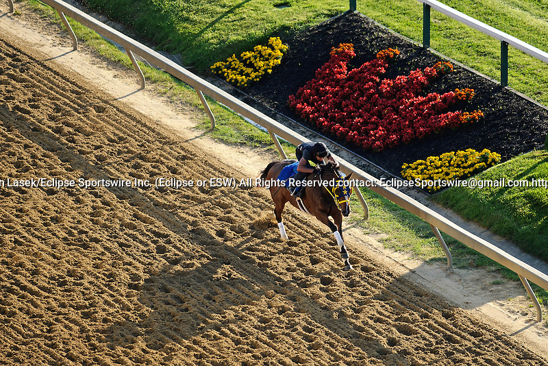 Horses workout in preparation for the 137th Preakness Stakes at Pimlico Race Course in Baltimore, MD on 05/18/12. (Ryan Lasek/ Eclipse Sportswire)