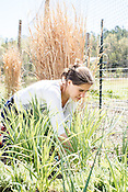 Durham, North Carolina - Wednesday March 30, 2016 - HUB Farm project manager pulls weeds in a bed at the farm in Durham.