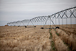 A center pivot irrigation system sits on the Oelke family farm outside of Hoxie, Kan., on Friday, Oct. 12, 2012. As historically dry conditions continue, farmers from South Dakota to the Texas panhandle rely on the Ogallala Aquifer, the largest underground aquifer in the United States, to irrigate crops. After decades of use, the falling water level ? accelerated by historic drought conditions over the last two years ? is putting pressure on farmers to ease usage or risk becoming the last generation to grow crops on the land. Farmers like Mitchell Baalman and Brett Oelke (both not pictured) are part of a farming community in in Sheridan County, Kansas, an agricultural hub in western Kansas, who have agreed to cut back on water use for crop irrigation so that their children and future generations can continue to farm and sustain themselves on the High Plains.