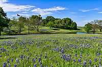 Bluebonnets along along the Blueblonnet trail in Ennis Texas during their festival. We went up for their bluebonnet festival they have every April. While the flowers were not a thick as previous years it certainly was a pretty landscape scene with the wildflowers, blue sky along the creek with the Texas flag in the back ground representing this texas bluebonnet landscape.