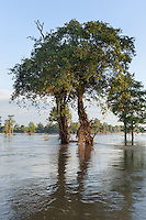 November 6, 2014 - Stung Treng (Cambodia). A view of the flooded forest inside the Ramsar protected area.