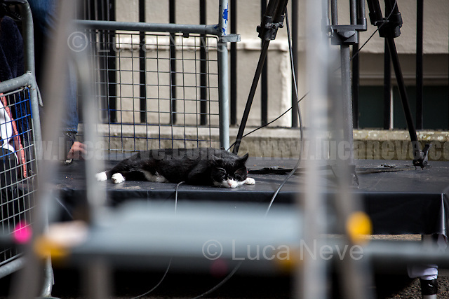 Palmerston (Foreign &amp; Commonwealth Office Cat anf Chief Mouser).<br />