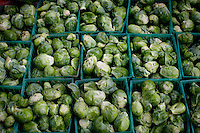 Ojai, California, October 19, 2010 - Baskets of Brussels sprouts from the weekly fall harvest at Rio Gozo Farm for their CSA, Community Supported Agriculture, members. The 4-acre farm is cultivated and managed by micro-farmer John Fonteyn and his wife Elizabeth. While there are several farms in Ojai that operate CSAs, Fonteyn saw a need for nearby Ventura, where no such opportunity exists. Though farming is a fairly solitary profession, Fonteyn has made a point to include the community by selecting creative pickup destinations and by hosting seasonal parties at his farm so that his members can visit, meet one another and learn more about where their food comes from. Members can also volunteer to help harvest once a week in exchange for food and the knowledge of how to grow and harvest various vegetables. Fonteyn also reaches out into the community by donating his time and some of his harvest to organizations that help to promote shared ideas of sustainability, local sourcing, and organic farming and well as building a network of communities around these shared values. ..Community Supported Agriculture, CSA, is an idea began in the 1960's whereby a farmer offers 'shares' to the public in return for payment up front. Each week the farmer delivers what seasonal produce is harvested. There are many advantages to both the farmer and the consumer. Benefits to the farmer include: 1) He has time to market early in the season to build subscriptions, allowing for more time during farming seasons to focus on the long harvesting days; 2) He receives payment early in the season which helps with the cash flow for seeds, planting and other up front costs; and 3) It allows the farmer to grow a more varied crop, minimizing the economic effects of trends in produce.  Benefits to the consumer include: 1) Ultra-fresh, locally grown, often organic produce; 2) Exposure to new vegetables and new ways of cooking; 3) Opportunity to develop a relationship with the farmer who grows your food