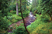 Crarae Gardens and the Crarae Burn, Argyll & Bute