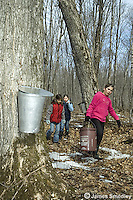 Young children collecting sugar maple sap in buckets