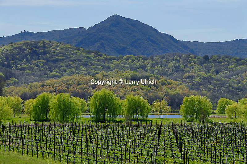 Saracina Vineyards and Duncan Peak<br />