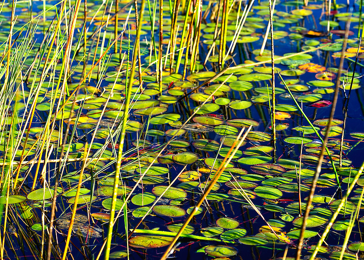 Botswana; Okavango delta; inland delta; fresh water, reed grass aerial and from water level