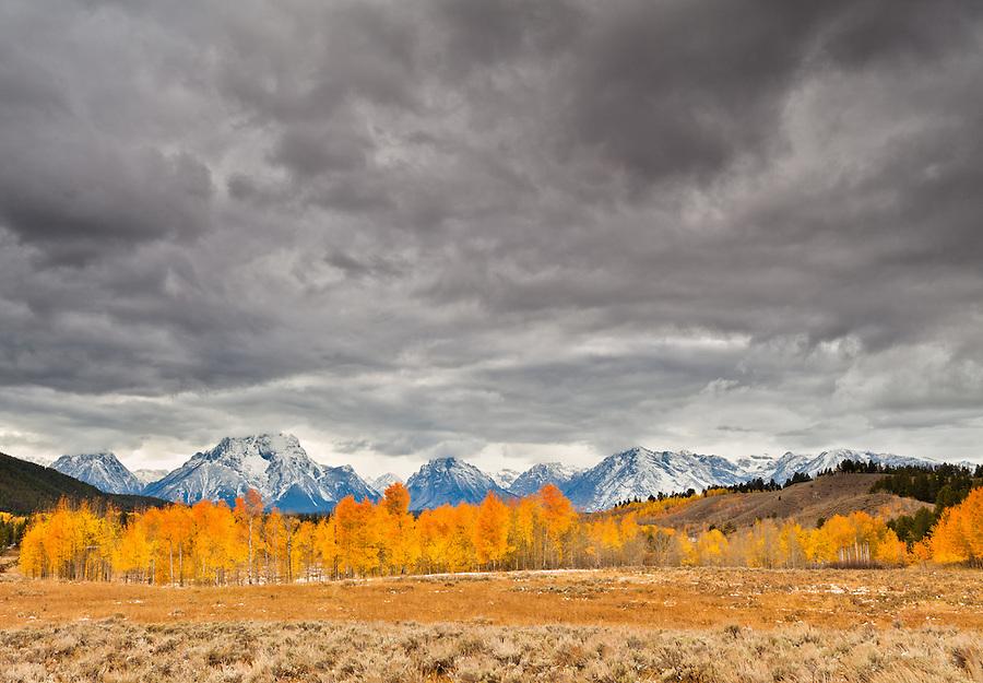 Bright yellow and orange aspen trees decorate the scene as rainclouds swirl overhead in Grand Teton National Park, Wyoming.
