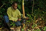 African Golden Cat (Caracal aurata aurata) researcher, Sam Isoke, placing camera trap on tree, Kibale National Park, western Uganda
