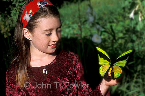 Young girl with birdwing butterfly Ornithoptera goliath mounted specimen