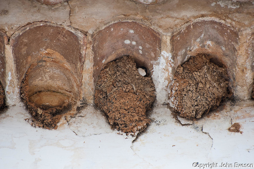 House martins 'Delichon urbica'  building mud nests under the eaves of a tiled roof, Obidos, Portugal. One bird in nest looking out..Breeds in towns and villages and on farm buildings, bridges and occasionally cliffs....Copyright..John Eveson,.Dinkling Green Farm,.Whitewell,.Clitheroe,.Lancashire..BB7 3BN.Tel. 01995 61280.Mobile 07973 482705.j.r.eveson@btinternet.com.www.johneveson.com