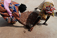 "Afrika Burkina Faso , Helvetas Projekt Frauen Kooperative Association Ragussi im Dorf Tanghim, Verarbeitung von Nuessen des Karite Baum zu fairtrade und Bio Karitebutter , die für Schoklade und Kosmetik genutzt wird - Landwirtschaft xagndaz | .Western Africa Burkina Faso , women association processing organic and fairtrade shea butter from Carite nut of Carite tree which is used for chocolate and cosmetics .| [ copyright (c) Joerg Boethling / agenda , Veroeffentlichung nur gegen Honorar und Belegexemplar an / publication only with royalties and copy to:  agenda PG   Rothestr. 66   Germany D-22765 Hamburg   ph. ++49 40 391 907 14   e-mail: boethling@agenda-fototext.de   www.agenda-fototext.de   Bank: Hamburger Sparkasse  BLZ 200 505 50  Kto. 1281 120 178   IBAN: DE96 2005 0550 1281 1201 78   BIC: ""HASPDEHH"" ,  WEITERE MOTIVE ZU DIESEM THEMA SIND VORHANDEN!! MORE PICTURES ON THIS SUBJECT AVAILABLE!!  ] [#0,26,121#]"