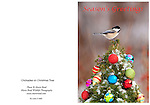 ChickadeeXmasTree_Card<br /> Standard format notecard, 7&quot; X 5&quot; (folded) glossy card stock, blank inside, includes matching envelope and clear presentation bag.