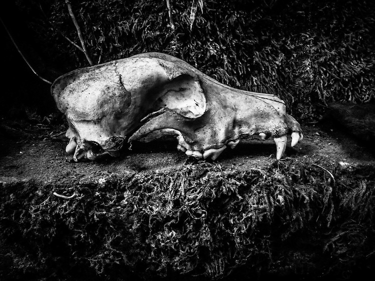 Interior shot of a dog's skull against mossy stone background.