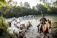 The Transhumance