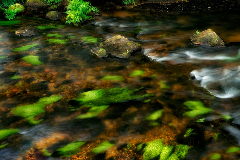 Moss coered stream bed. Teign River Dartmoor National Park, England