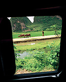 CHINA, Guilin, farmer walking with wild buffalos through the countryside outside of Guilin