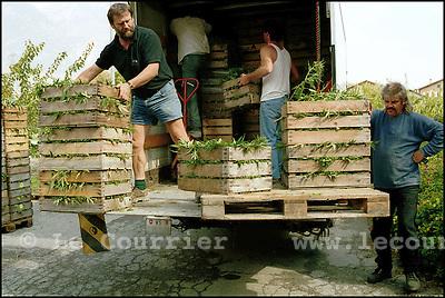 Charrat le 21.09.2001.Récolte et transport de chanvre chez Bernard Rappaz,(à gche) producteur de chanvre en Valais..© J.-P. Di Silvestro / Le Courrier