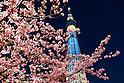 Kawazu-zakura cherry blossoms at Tokyo Skytree