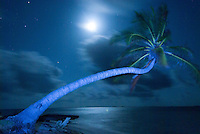 Light Painting on palm tree, Isla Kuanidup, San Blas Islands, Panama.