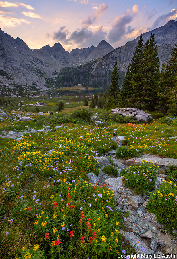 Wind River Range, WY: Sunset clouds over the Cirque of the Towers from a field of alpine wildflowers Popo Agie Wilderness; Shoshone National Forest