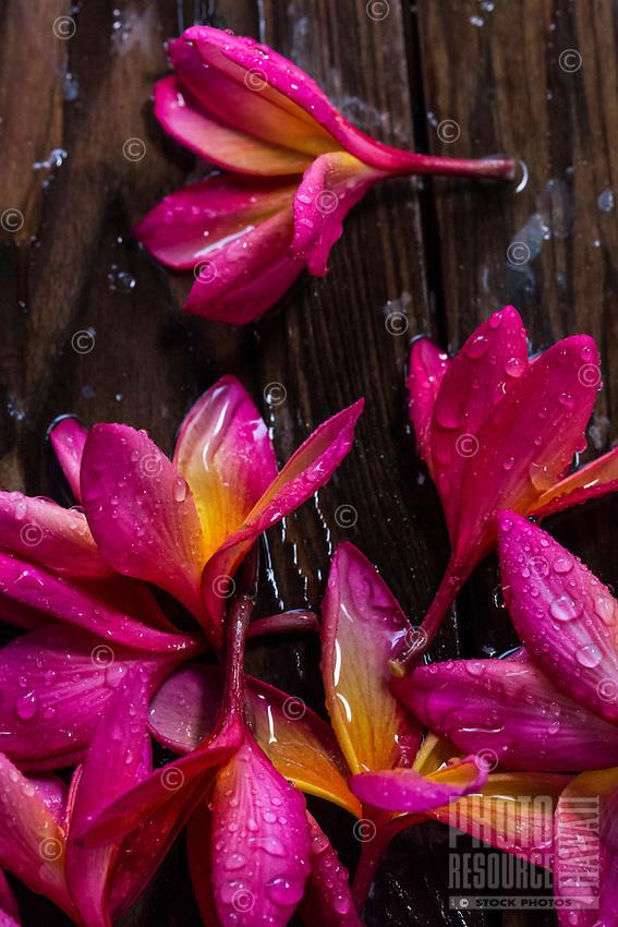 Rain-saturated plumeria flowers on a deck on O'ahu.