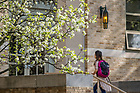 April 18, 2017; Students walking to class, spring 2017(Photo by Matt Cashore/University of Notre Dame)