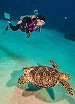 8 July 2013: SCUBA diver Sally Herschorn swims with a Loggerhead Turtle (Caretta caretta) gliding over a sandy a sandy patch of Spanish Bay Reef, off the North Shore of Grand Cayman Island.  Located in the British West Indies in the  Caribbean, the Cayman Islands are renowned for excellent scuba diving, snorkeling, beaches and banking.  Mandatory Credit: Ed Wolfstein Photo