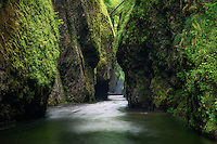 Long exposure looking into Oneonta Gorge.